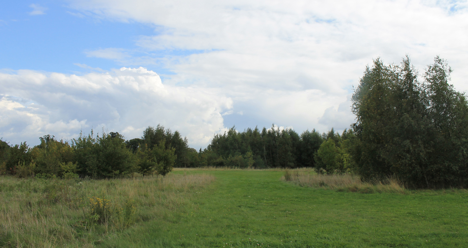 Open space and trees in Shocott Spring