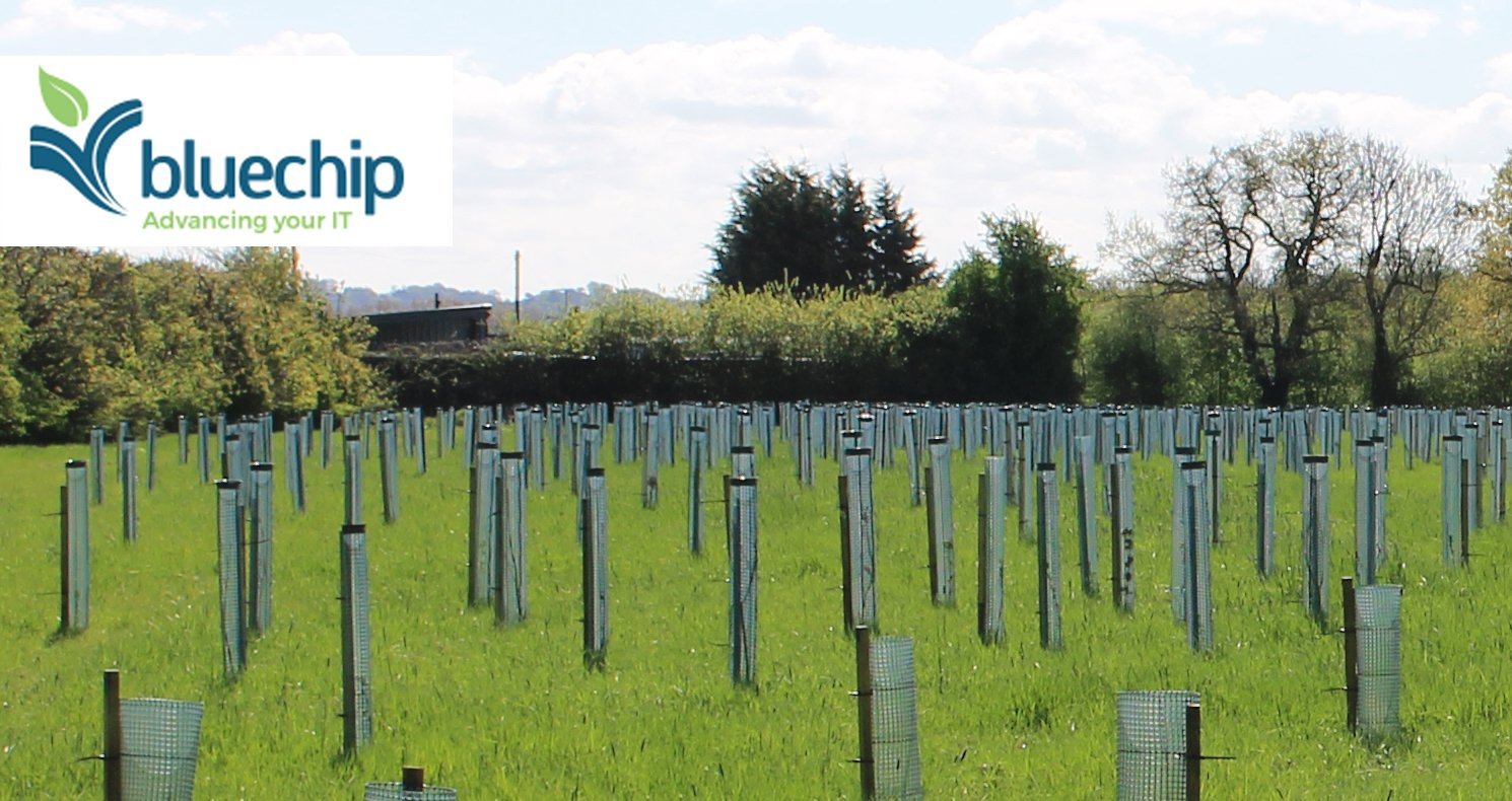 Blue Chip logo on a background of newly planted trees